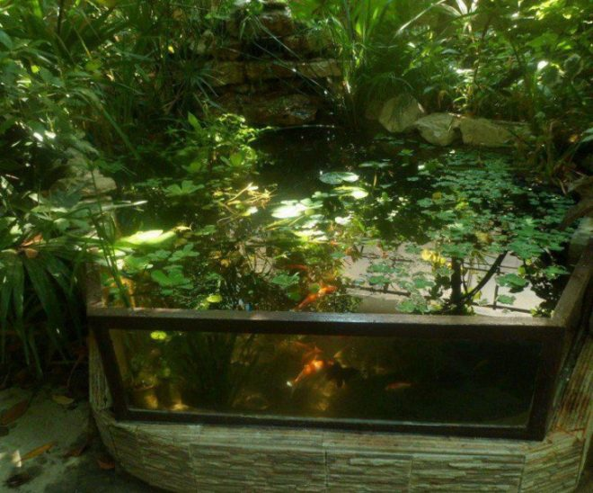 Пруд из большого аквариума