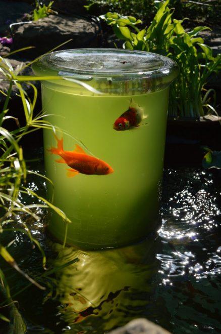 Рыбья башня