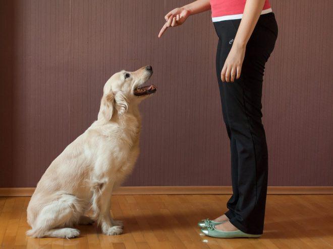 Девушка отчитывает собаку